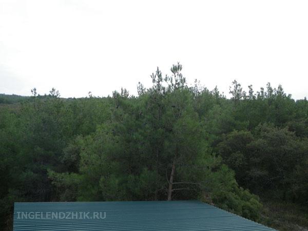 Геленджик частный сектор, фото вид из окна на хвойный лес