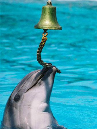 Геленджик дельфинарий